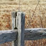 """Fence"" by BobW"