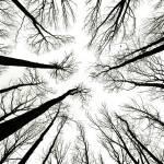 """""""Tree Tops"""" by JuneMarie"""