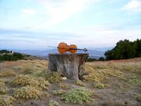 Cello in Ojai