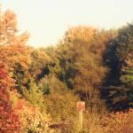 """""""autumn."""" by caitlin"""