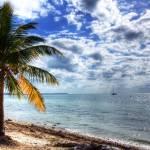 """""""Palm Tree"""" by ewolphoto"""