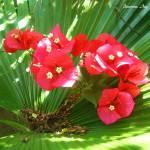 """""""""""Floral Devine"""""""" by PassionsInc"""
