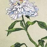 """""""White Peony"""" by clovia"""