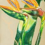 """Birds in Flight"" by clovia"