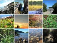 scenes from Acadia National Park in Maine  (click
