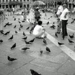 """""""The Birds in the Square"""" by thefunkhouse"""