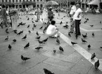 The Birds in the Square