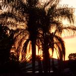 """""""Florida Palm Tree"""" by thefunkhouse"""