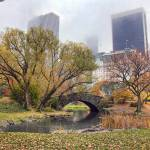 """""""Central Park"""" by JuneMarie"""