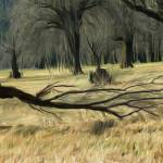 """Columbia_Basin_Trees_Adobe1998"" by paun"