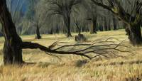 Columbia_Basin_Trees_Adobe1998