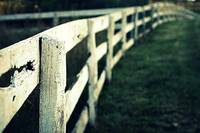 Bokeh'd horse fence at sunset...