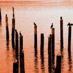 """6th Ave Boat House Pilings 006"" by BobNewtonPhotography"