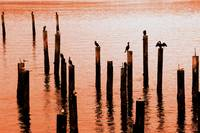 6th Ave Boat House Pilings 006