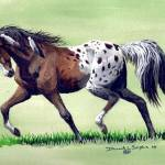 """Native appaloosa"" by equineart4u"