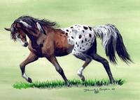 Native appaloosa