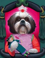 'Little Ting Ting' - Shih Tzu