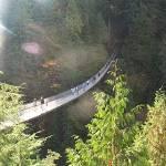 """Sunlight over Capilano Bridge"" by AccidentalHedonist"