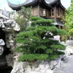 """""""Chinese Garden"""" by AccidentalHedonist"""