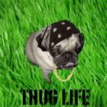 """Thug Life"" by toekne456"