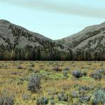 """Colorado Shrubland"" by davecatts"