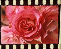 Rose with Filmstrip Border