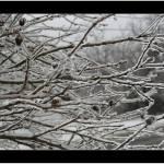 """""""Ice Storm"""" by sherryswest"""