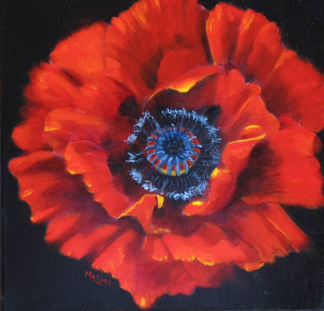 Red Opium Poppy On Black By Marion Hedger
