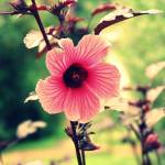 """Rainforest Flower"" by HJAD"