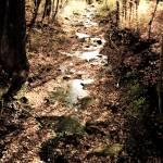 """creekfall081"" by Kathryn_s_Watson"