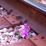 """Purple Flower Railroad Track"" by Lisajoy"