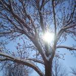 """Winter Tree"" by Lisajoy"