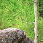 """""""Aspen and boulder, CO"""" by mckeejam"""