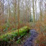 """""""Fallen tree in Clowes Wood0001"""" by simonart"""