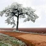 """""""Wintry Tree"""" by lj1980s"""
