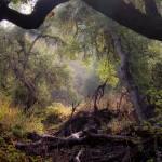 """Light Woods"" by jrphotos"