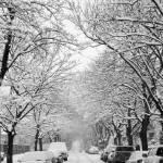 """Winter In Kitsilano"" by Larissa"