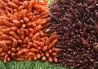 Pile of Orange and Purple Carrots