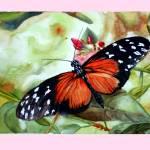 """""""Papillon"""" by Papillon55"""