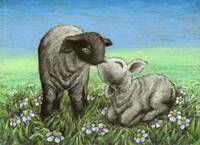 Two lambs kissing