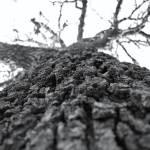"""""""Tree Go Up"""" by buyphotoart"""