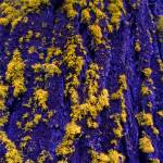 """Blue Bark & Yellow Lichen"" by mikenorton"