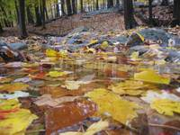 Bath of Yellow Leaves Harriman State Park NY