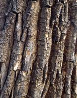 Vertical Tree Bark