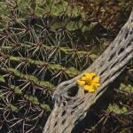 """""""Cactus & Flower"""" by mikenorton"""