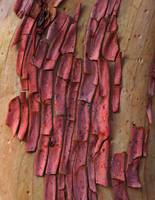 Abstract Bark