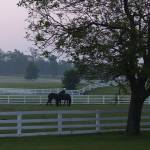 """Horse farm Morning Kentucky"" by caredog"