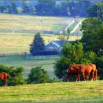 """""""The Upper Pasture"""" by caredog"""