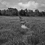 """Abandoned Rice Fields, South Carolina, August 2006"" by eightarts"