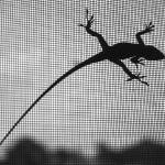 """Anole on Screeen, South Carolina"" by eightarts"